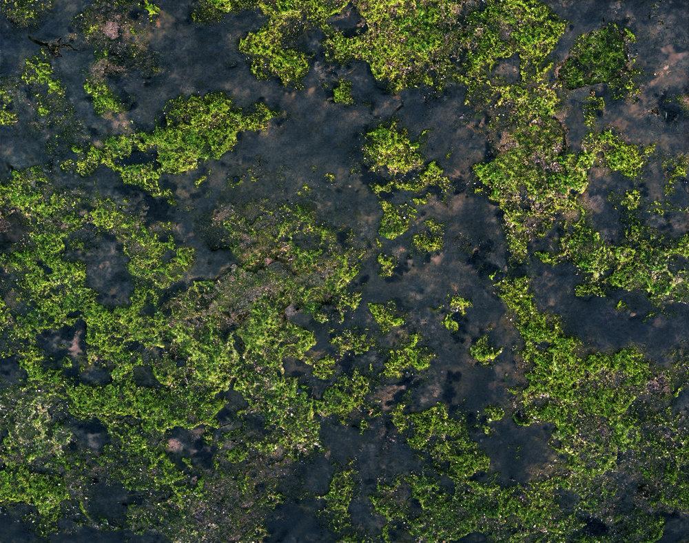 meadowlandsairial1(8x10).jpg