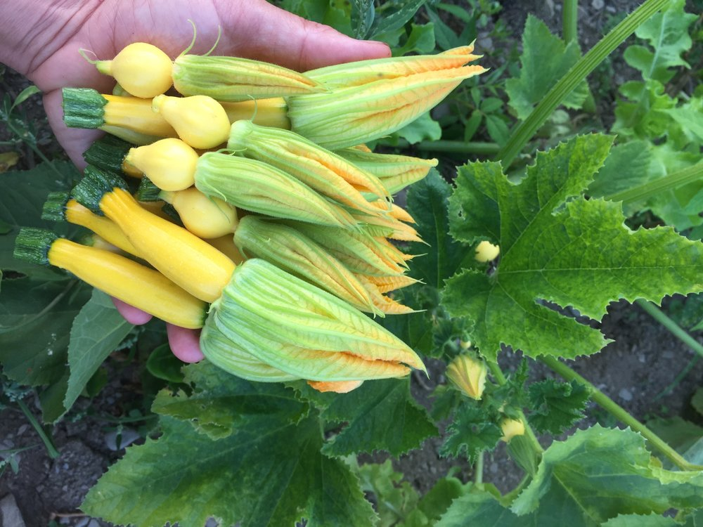 Summer Squash with Blossoms
