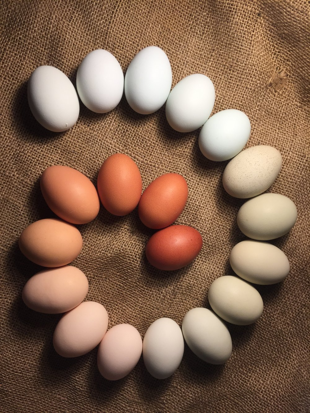 Rainbow of eggs