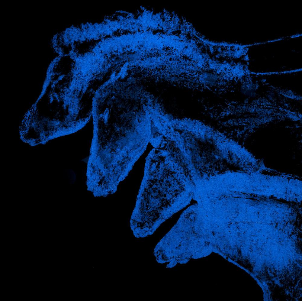 Chevaux Chauvet  Vision de nuit  70 X 70 cm - boite altuglas et bois