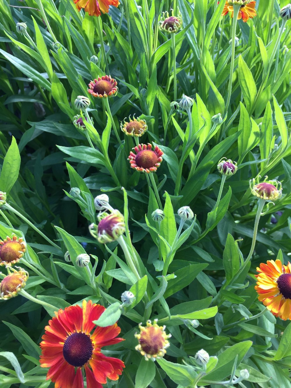 Garden flowers at Turtlehead Farms