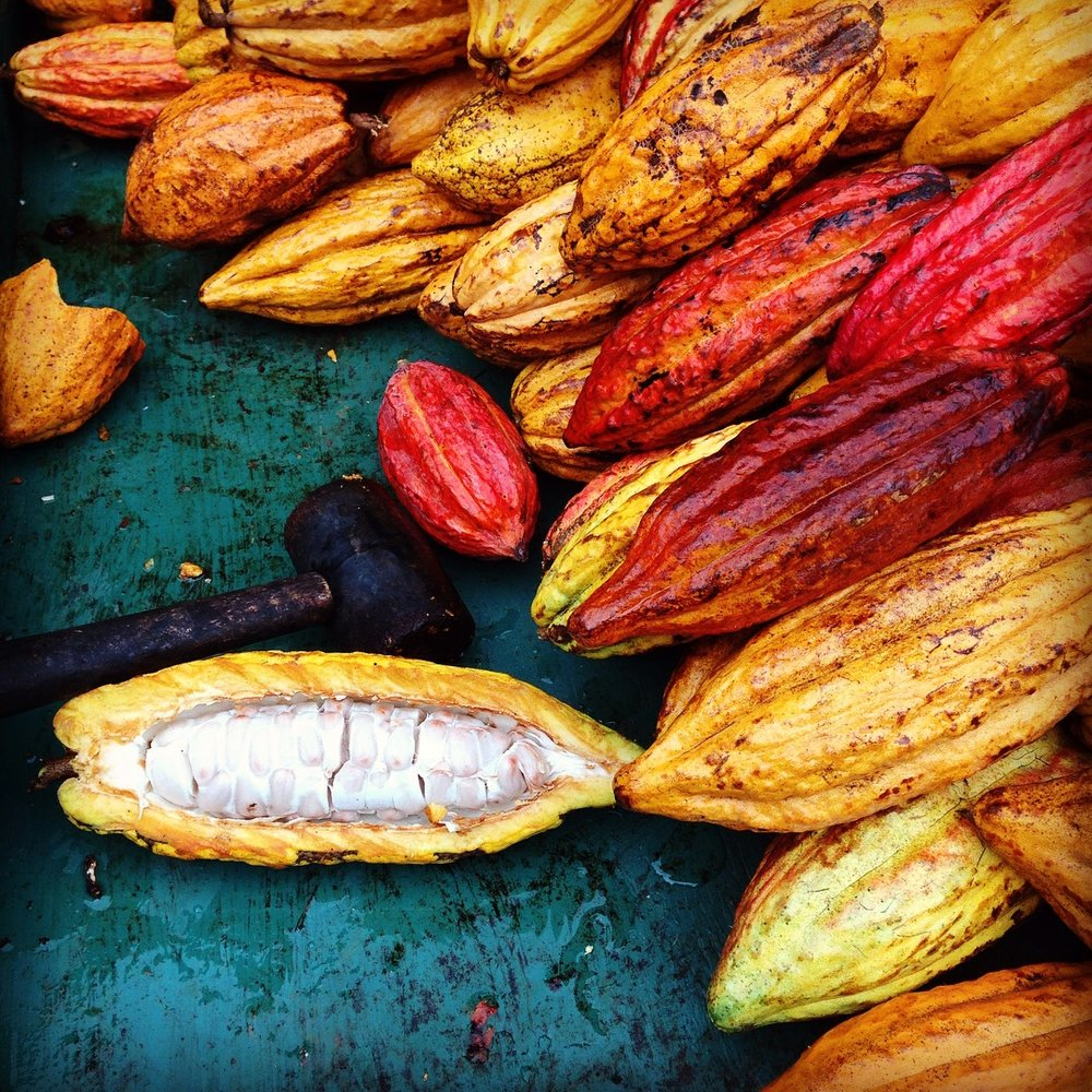 Cacao! I got a chance to bash open the pods and scoop out the seeds while on a chocolate tour in Kauai, Hawaii.