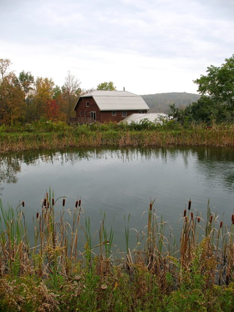 house, pond copy.jpg