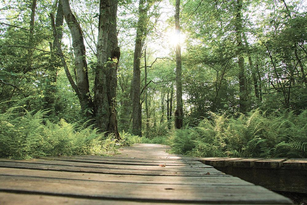 Trails -