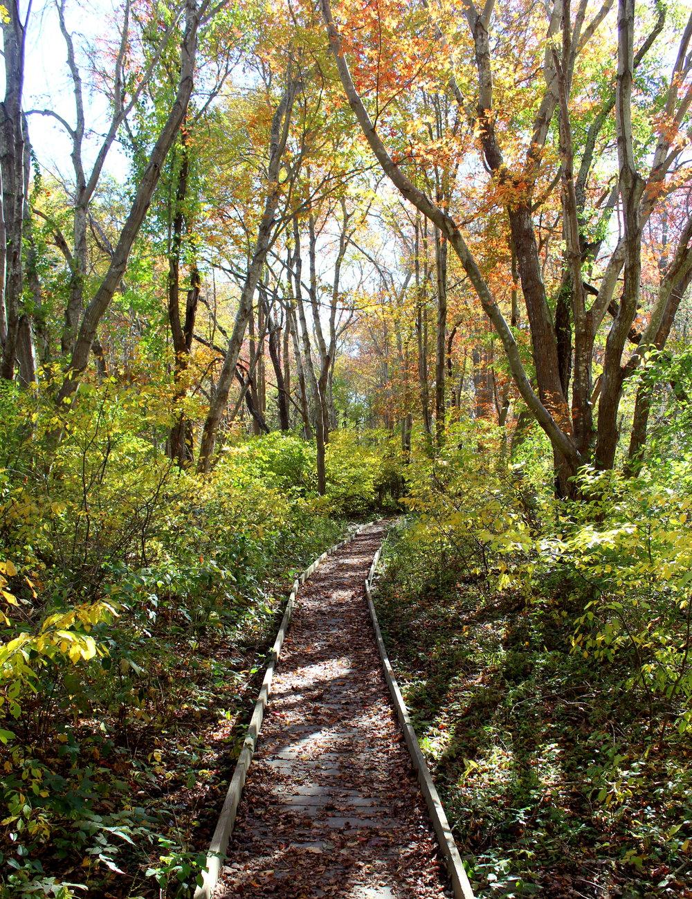 trail foliage 11-1.jpg