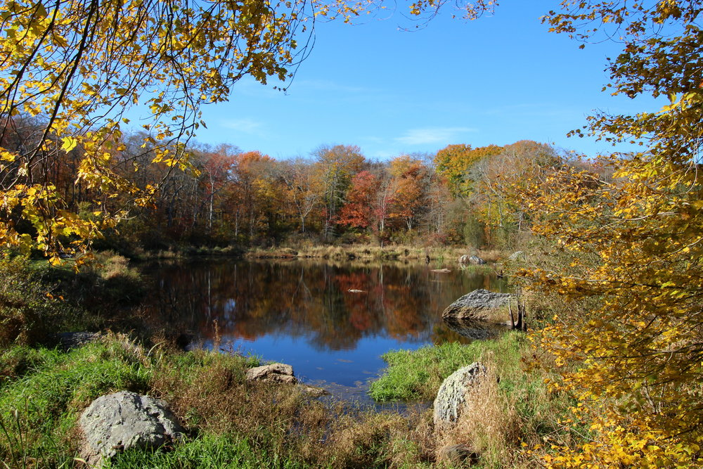 Red Maple Pond, October.