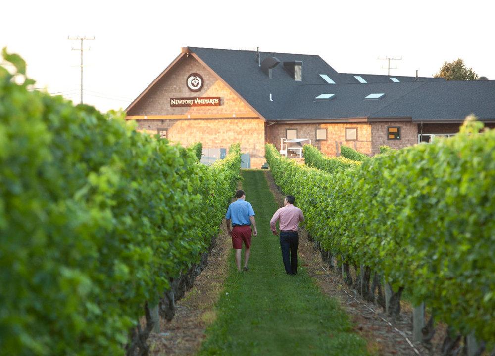 newport vineyards.jpg