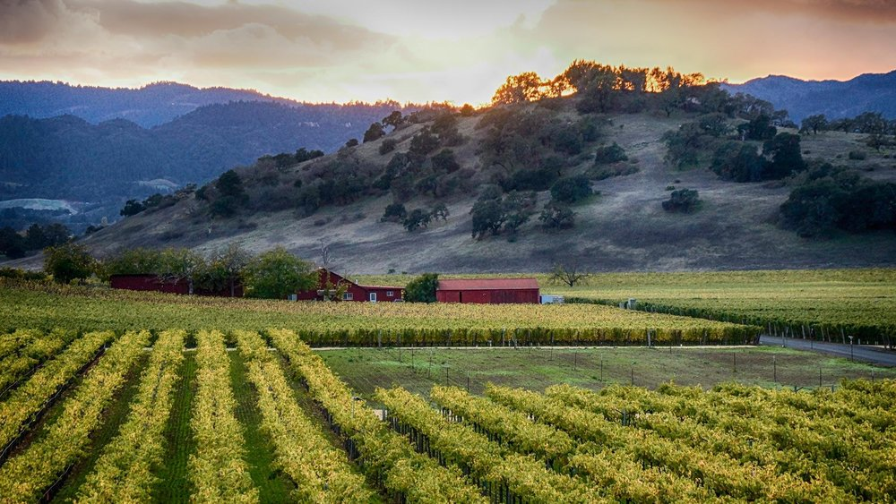 19screamin-eagle_napa-valley_iconic-wine-tours_467_COMP.jpg