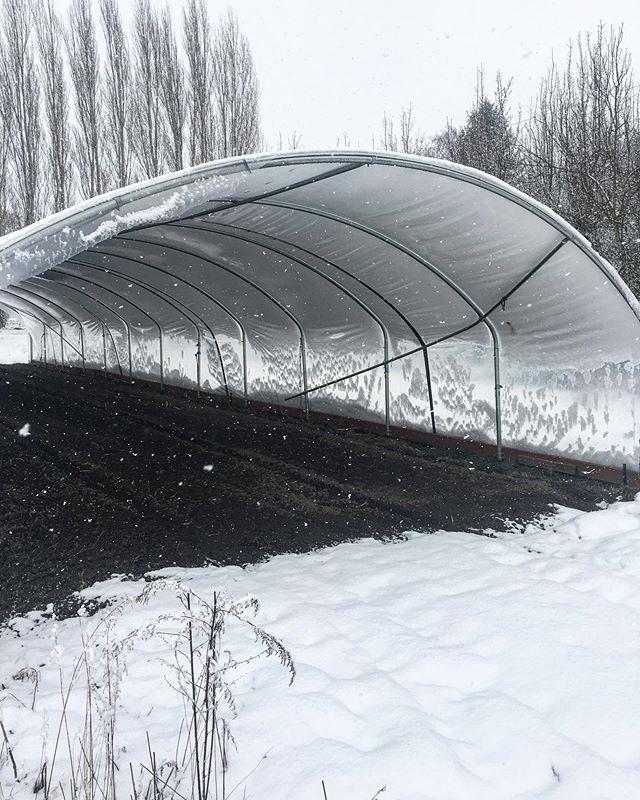 Today #snow #farm #pnw #skagitvalley