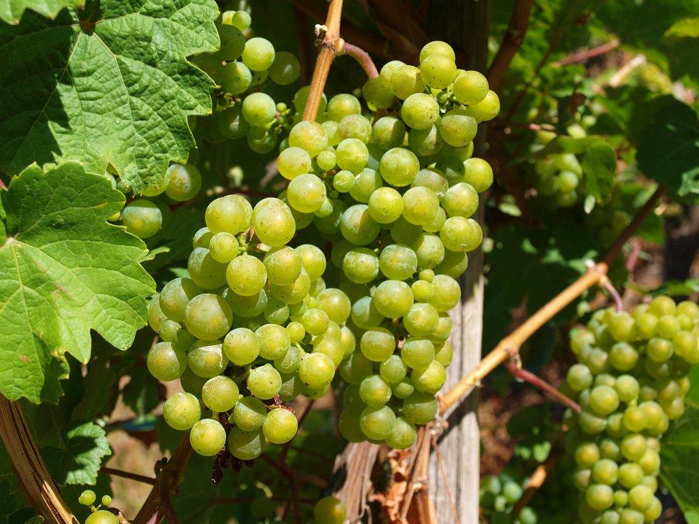wine-1685907_1920.jpg