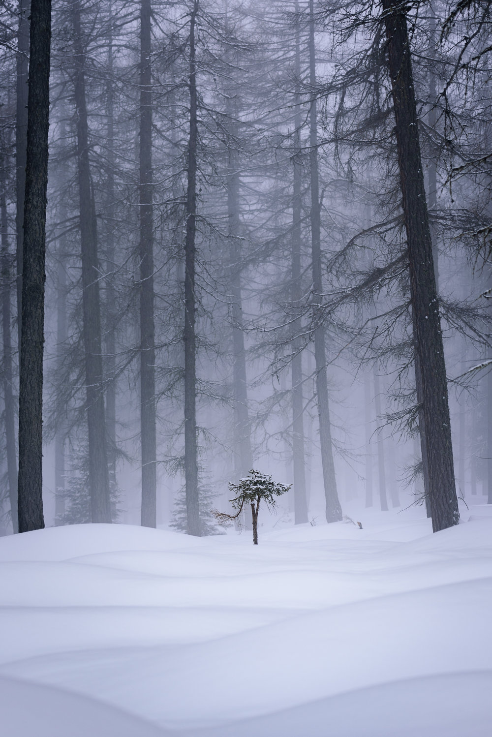 2018-03-03_Web_2167_Alone in the forest.jpg