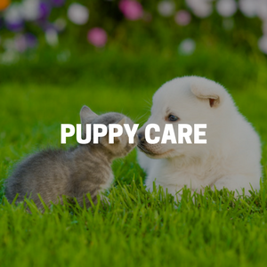 Puppy Care in Bergen County New Jersey