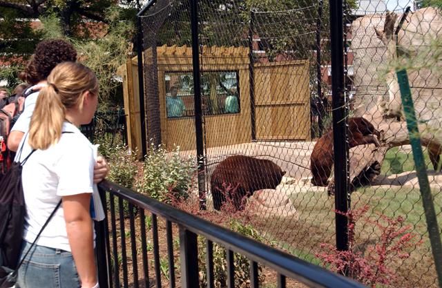 Baylor Bears 3.JPG