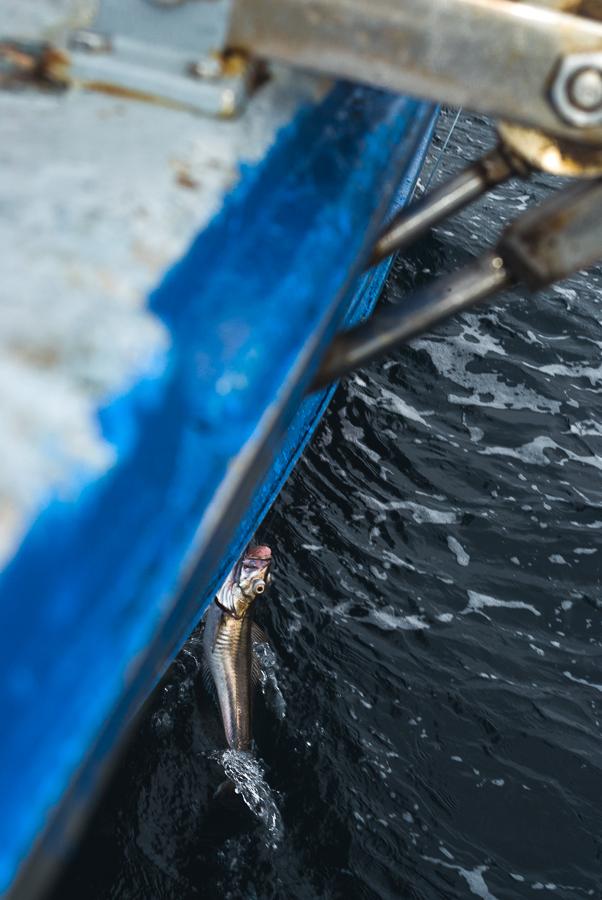 farelo-hake-fishing.jpg