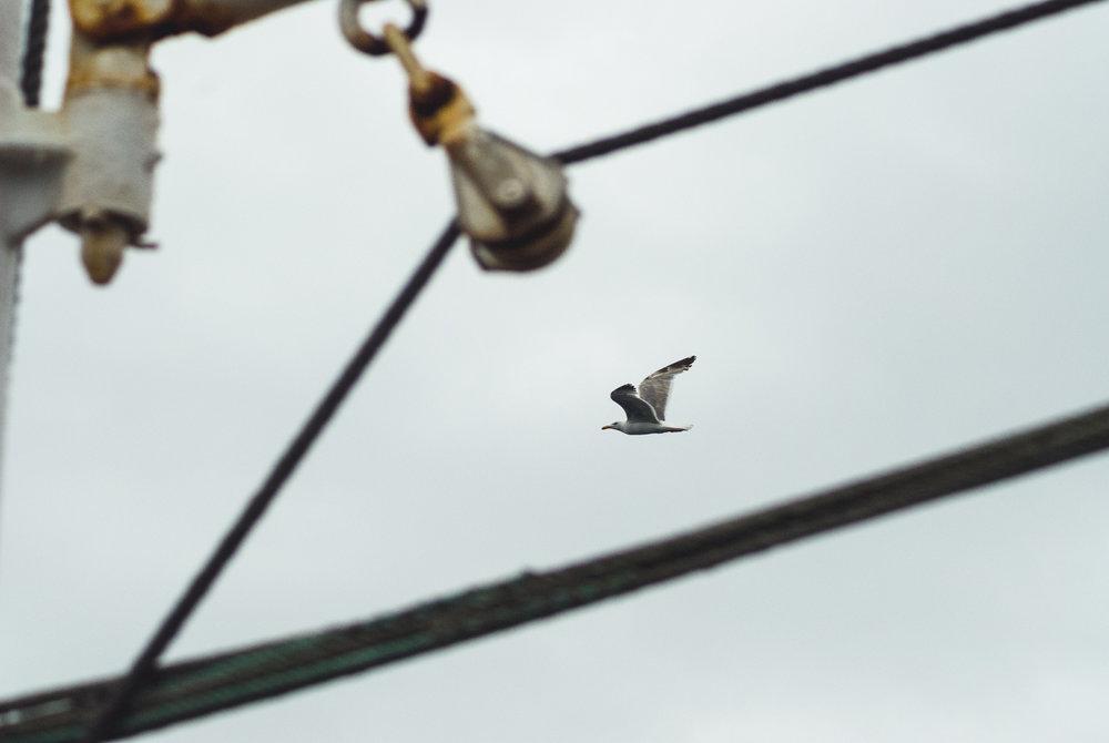farelo-seagull-fishing.jpg