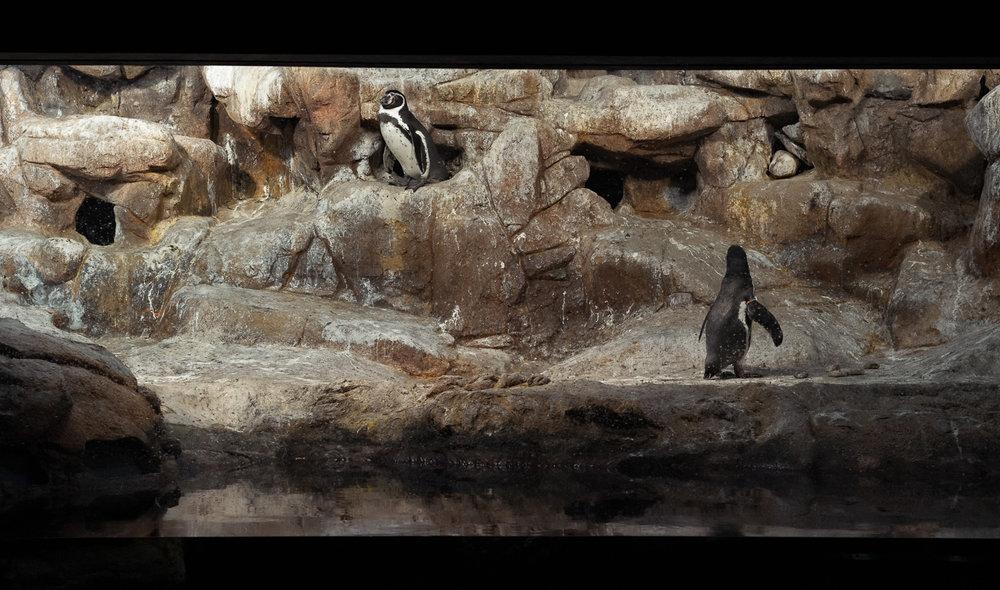 aquarium-penguins.jpg