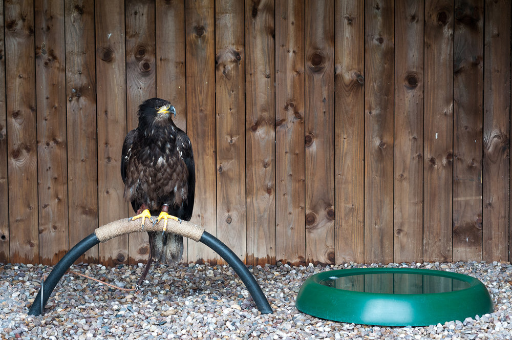eagle-stand.jpg