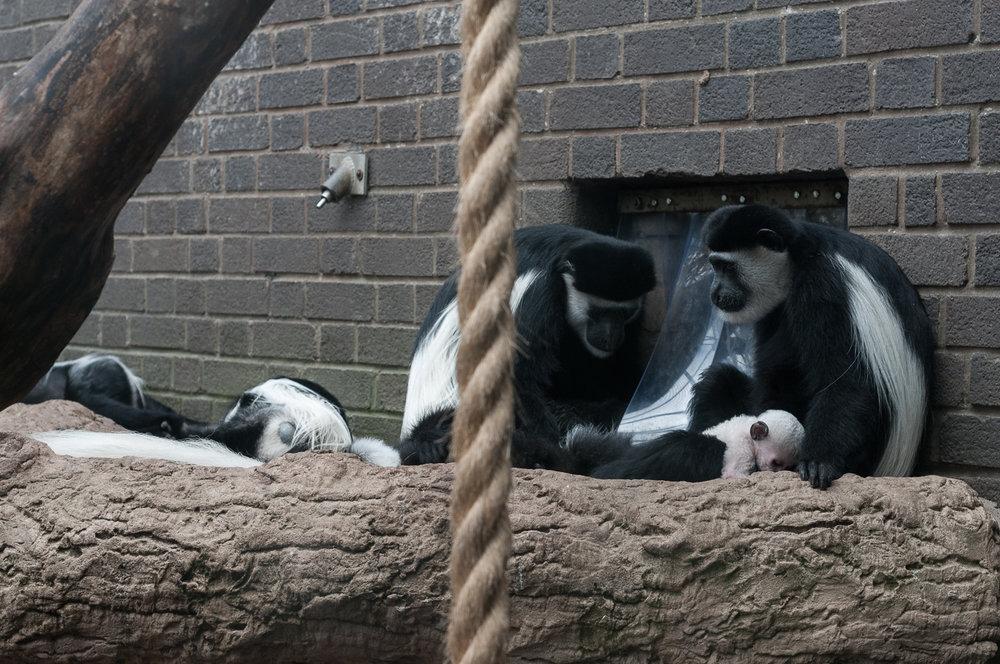 lemur-family.jpg