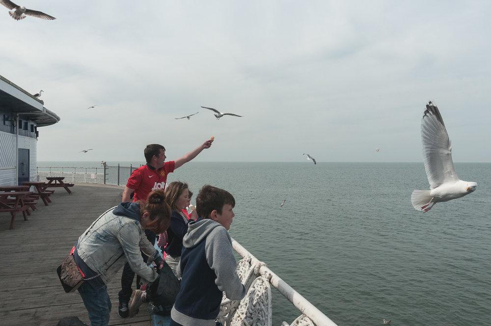 blackpool-pier-seagulls.jpg
