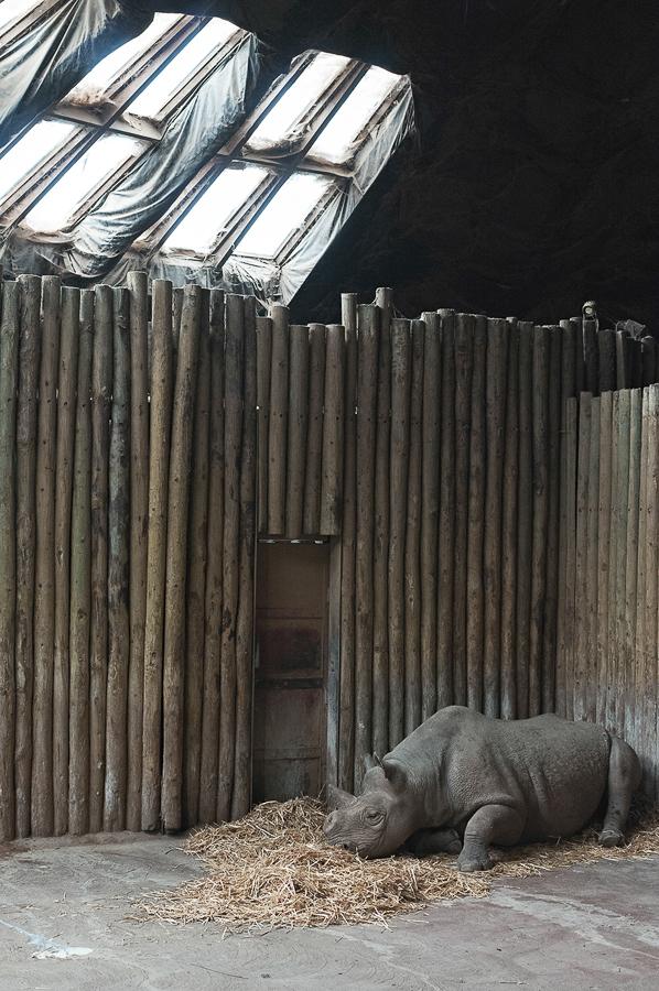 hornless-rhino.jpg