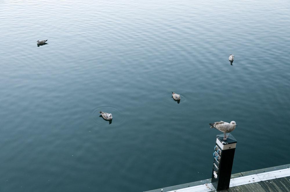 liverpool-docks-seagulls.jpg