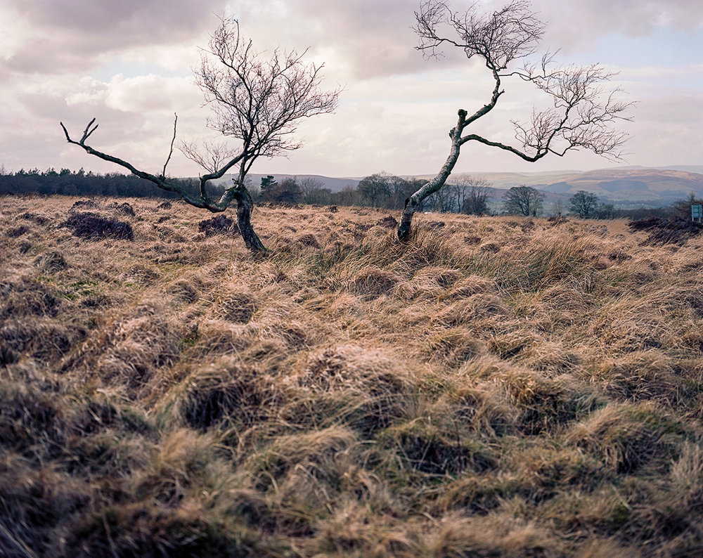 large-format-tree's-peak-district.jpg