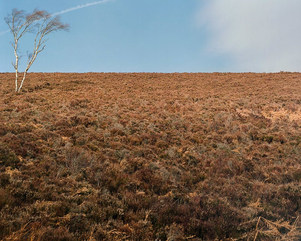 peak-district-kodak-ektar-100-tree.jpg