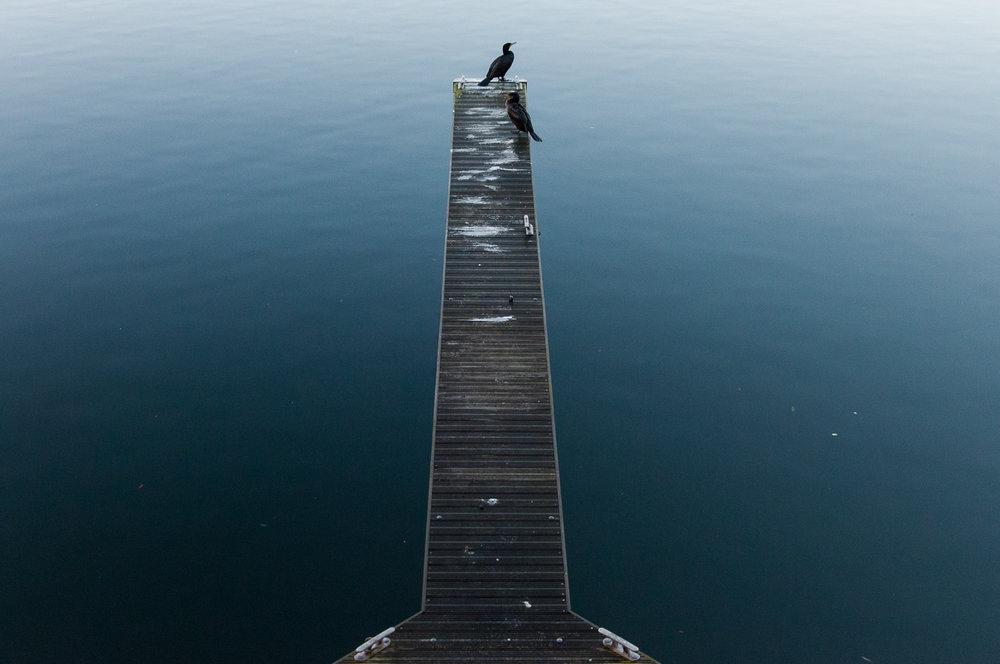 cormorants-liverpool-docks.jpg