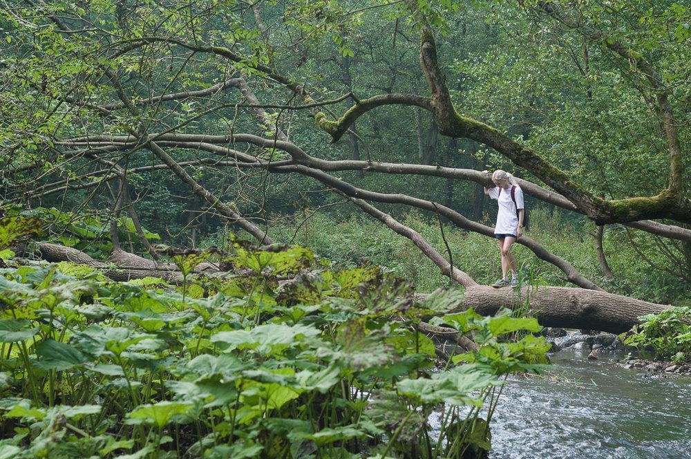 dovedale-river-tree-walk.jpg