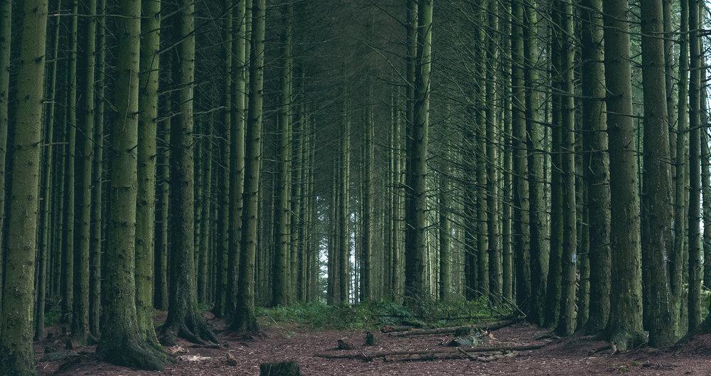 forest-mole-fammue-landscape.jpg