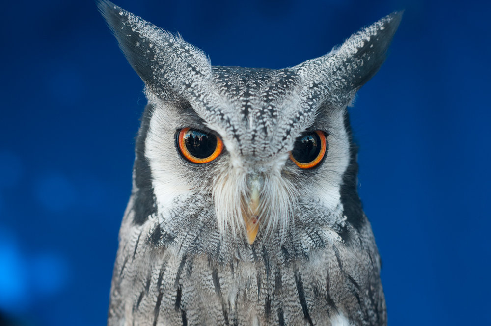 owl-eyes-portrait.jpg