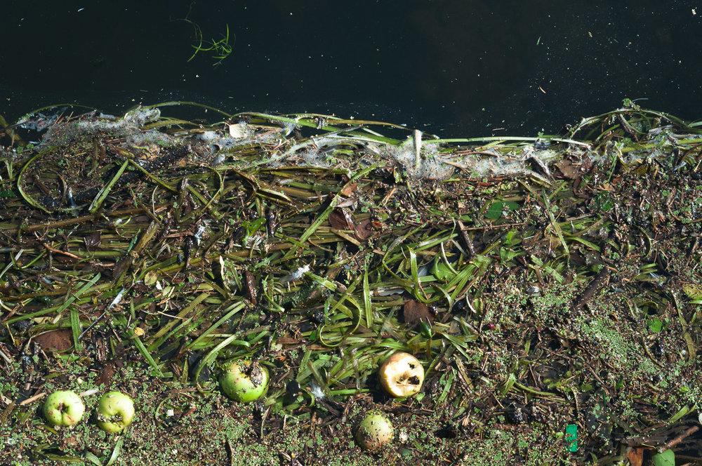 river-weeds-apple-space.jpg