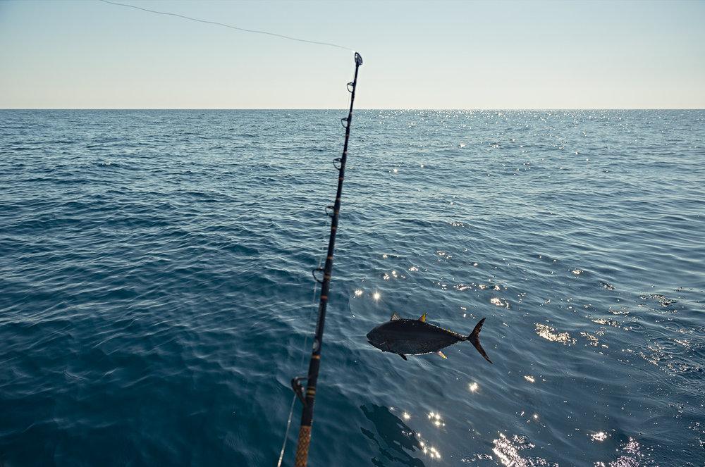 tuna throw line.jpg