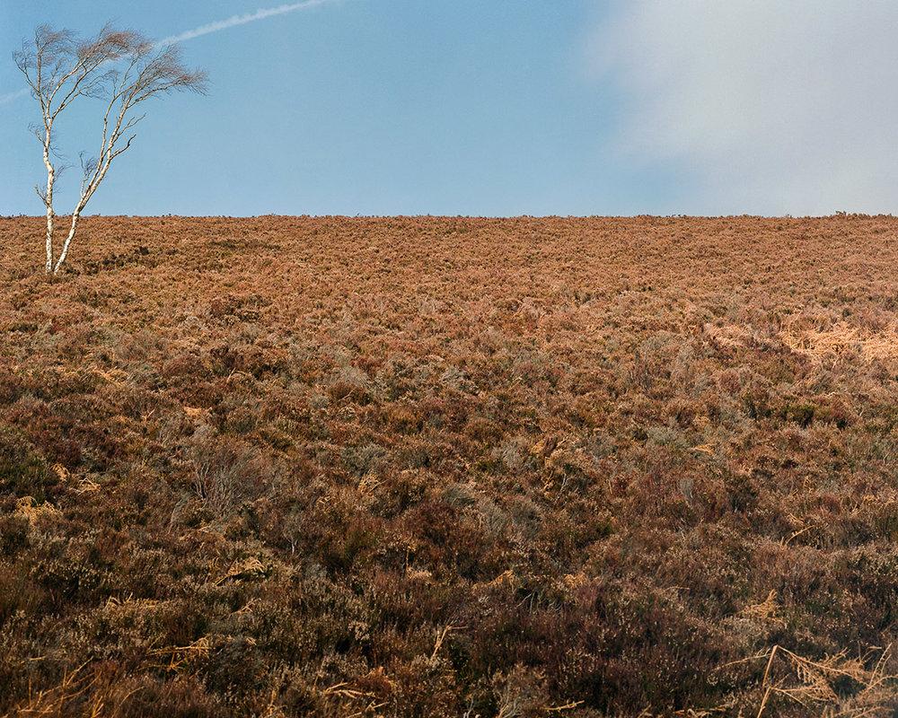 large-format-tree-landscape.jpg