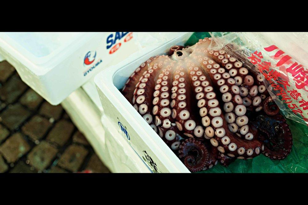japan-octopus-tenticals.jpg