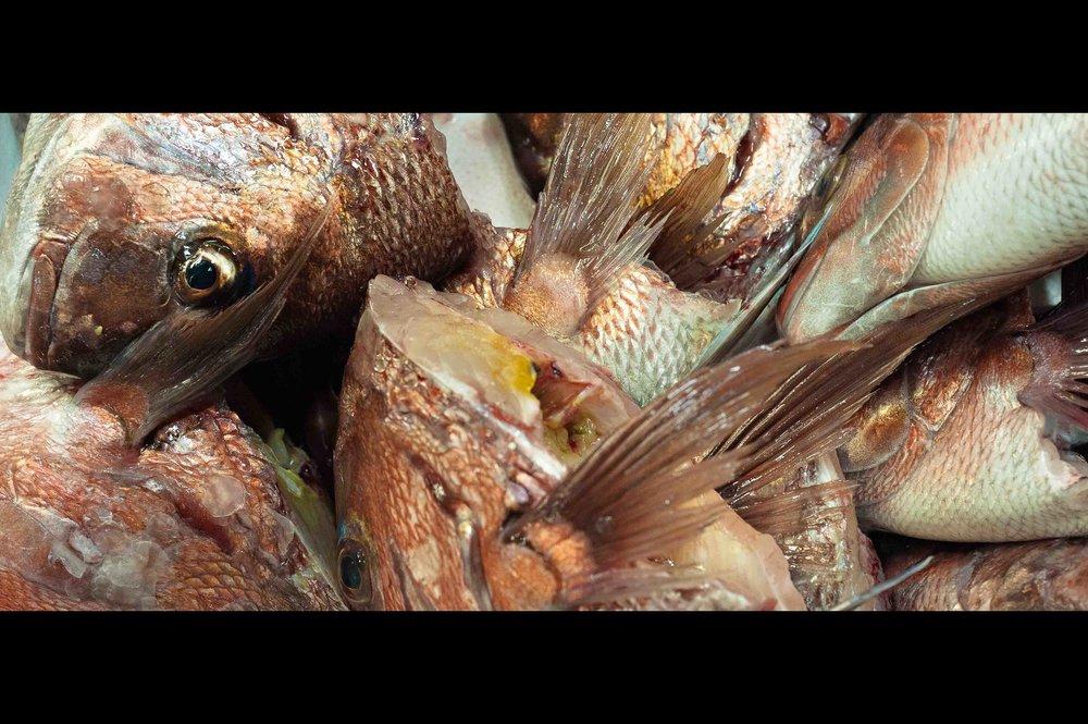 sea-bream-fish-heads.jpg