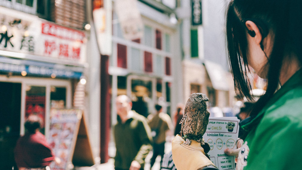 owl-cafe-tokyo-little-street.jpg