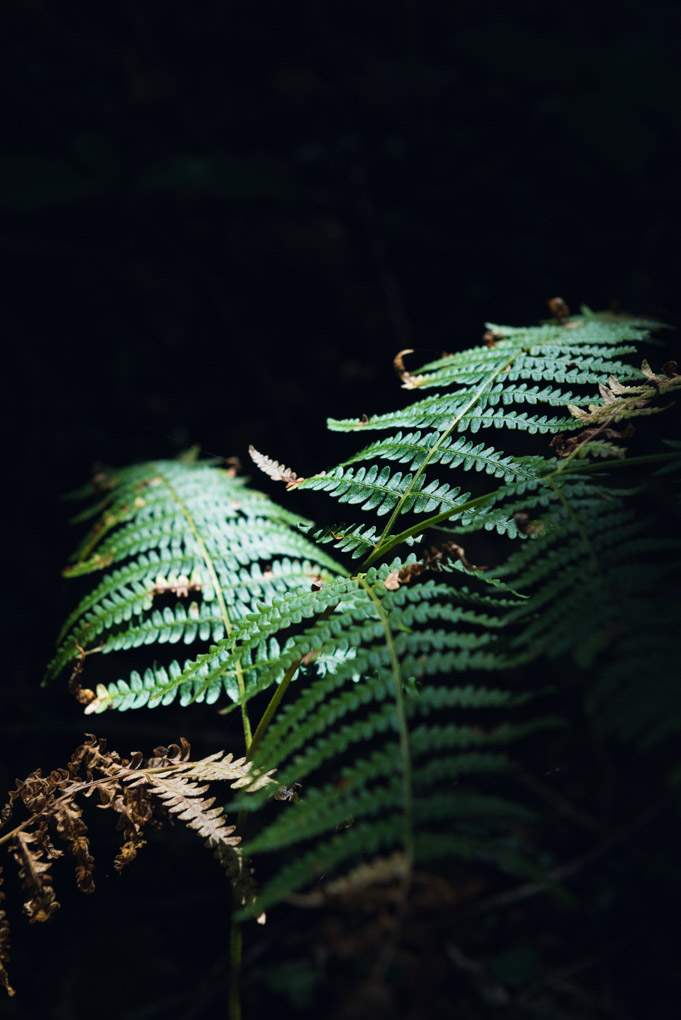 fern-black-halo-lighting (1 of 1).jpg