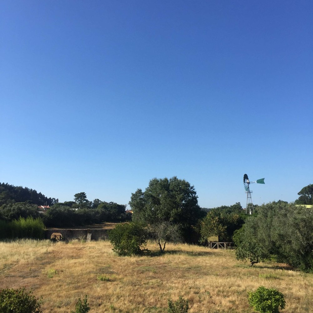 Quinta do Scoto grounds.jpg