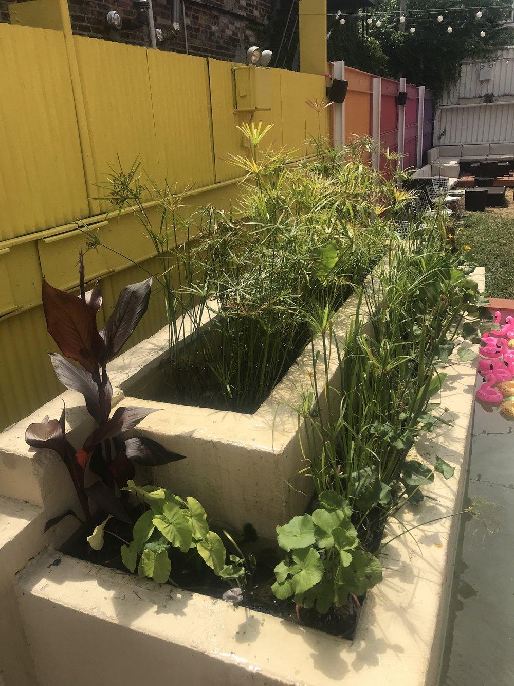 Aquatic Plant Fountain Install