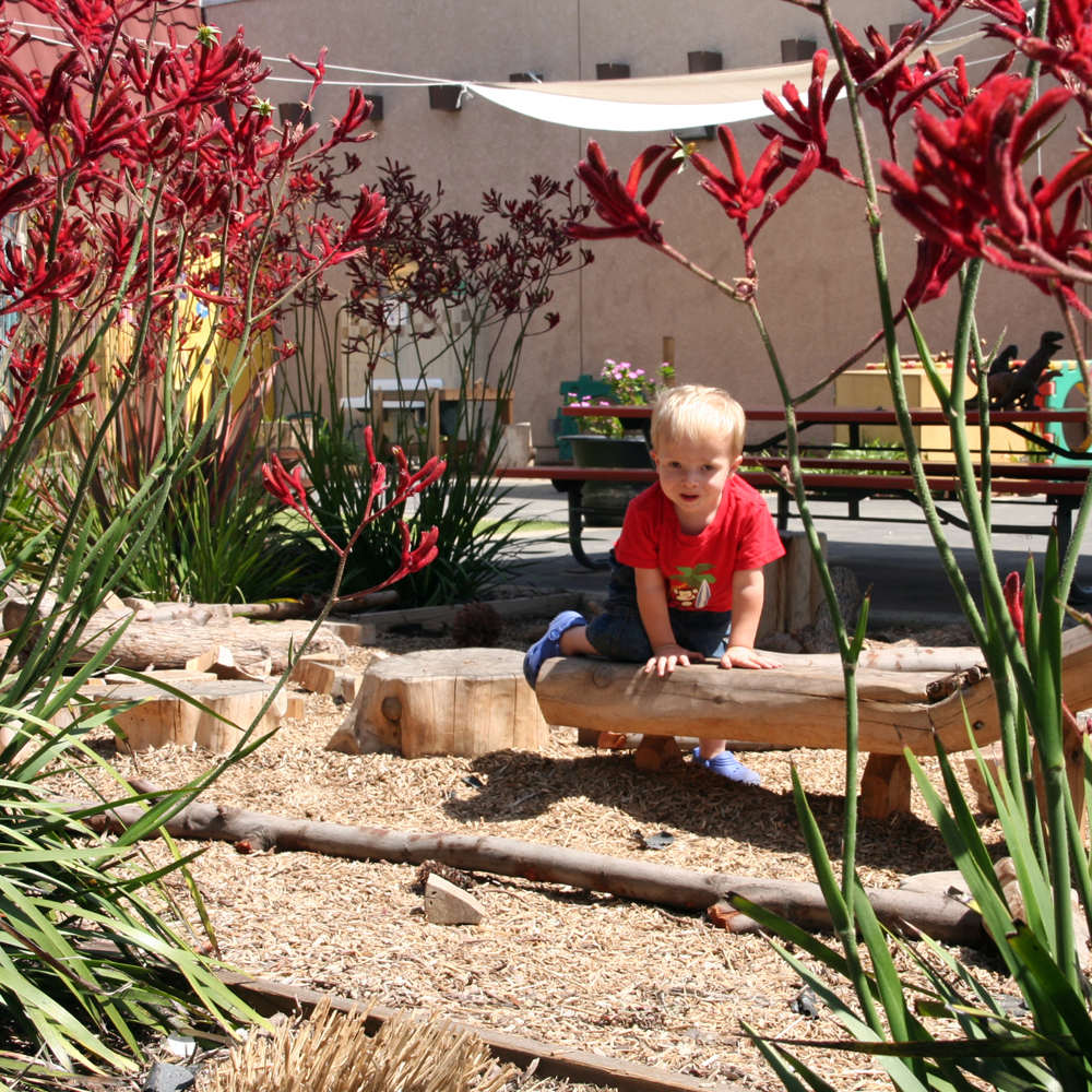 NATURE PLAY SCHOOL YARD