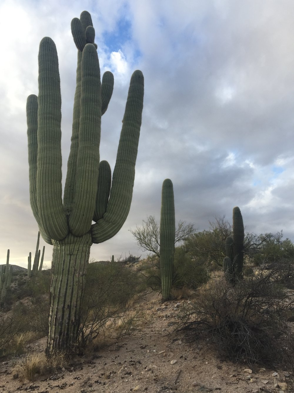 Just the beginning of the big saguros