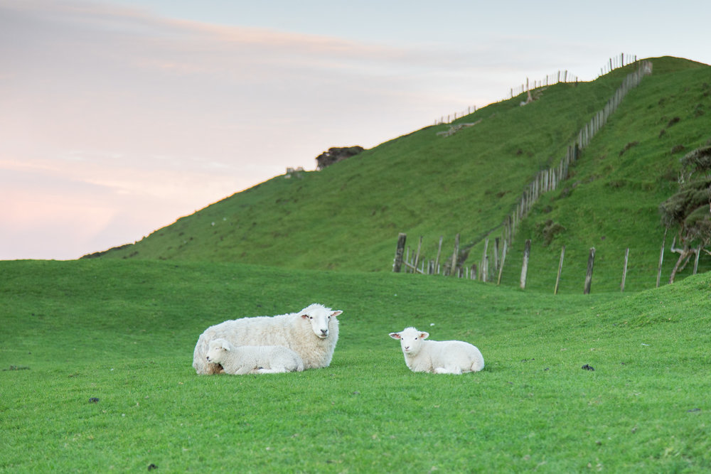 How cute are these babies with their mumma? This is when we first got to Cape Farewell.