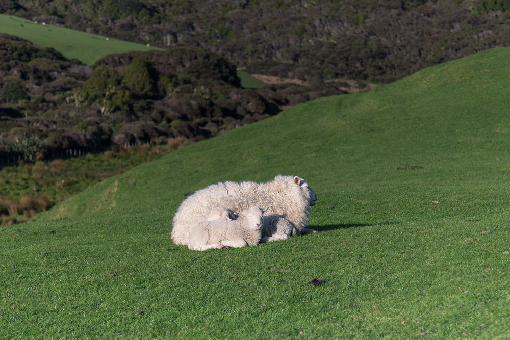 See how the light has changed as we left Cape Farewell? And the wind had picked up so much that the two babies are now snuggling right up.