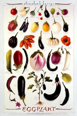 600_Eggplant.jpg