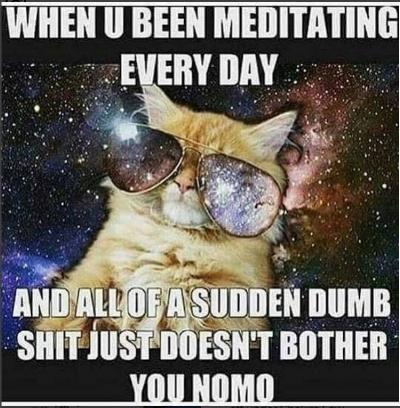 meditation cat.jpg