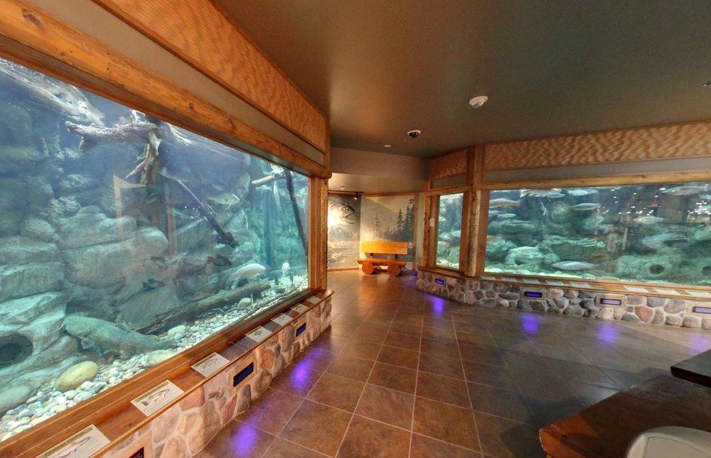 Aquariums.JPG
