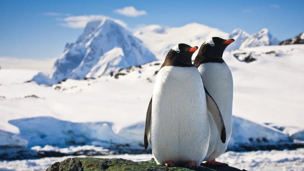 antarctica-ms2.jpg