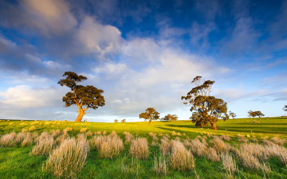 Landscape South Australia.jpg