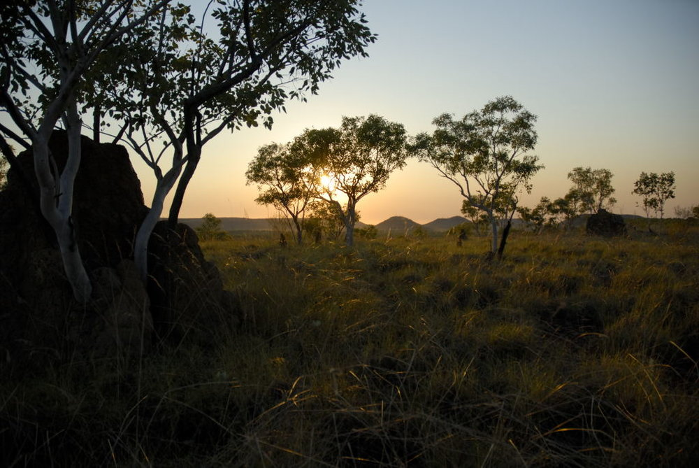 Spinifex sunset.JPG